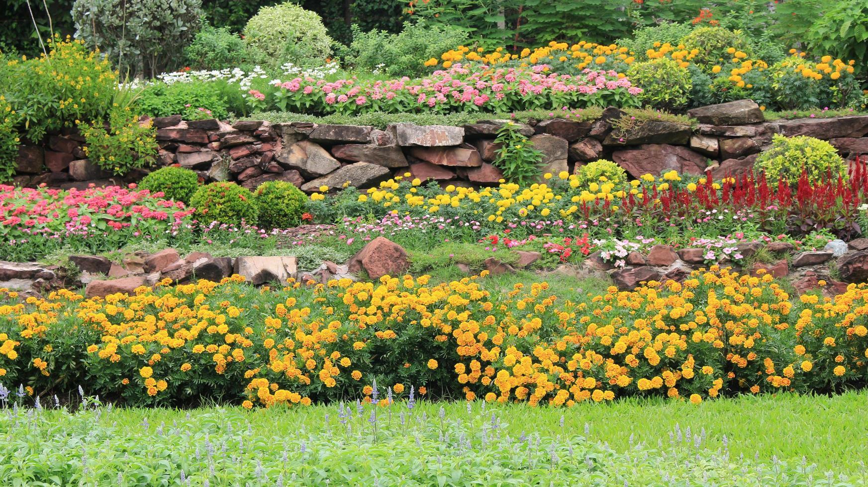 macizos de flores foto