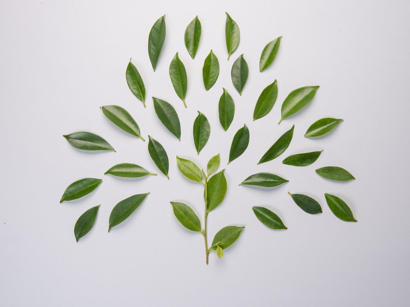 hojas sobre fondo blanco foto