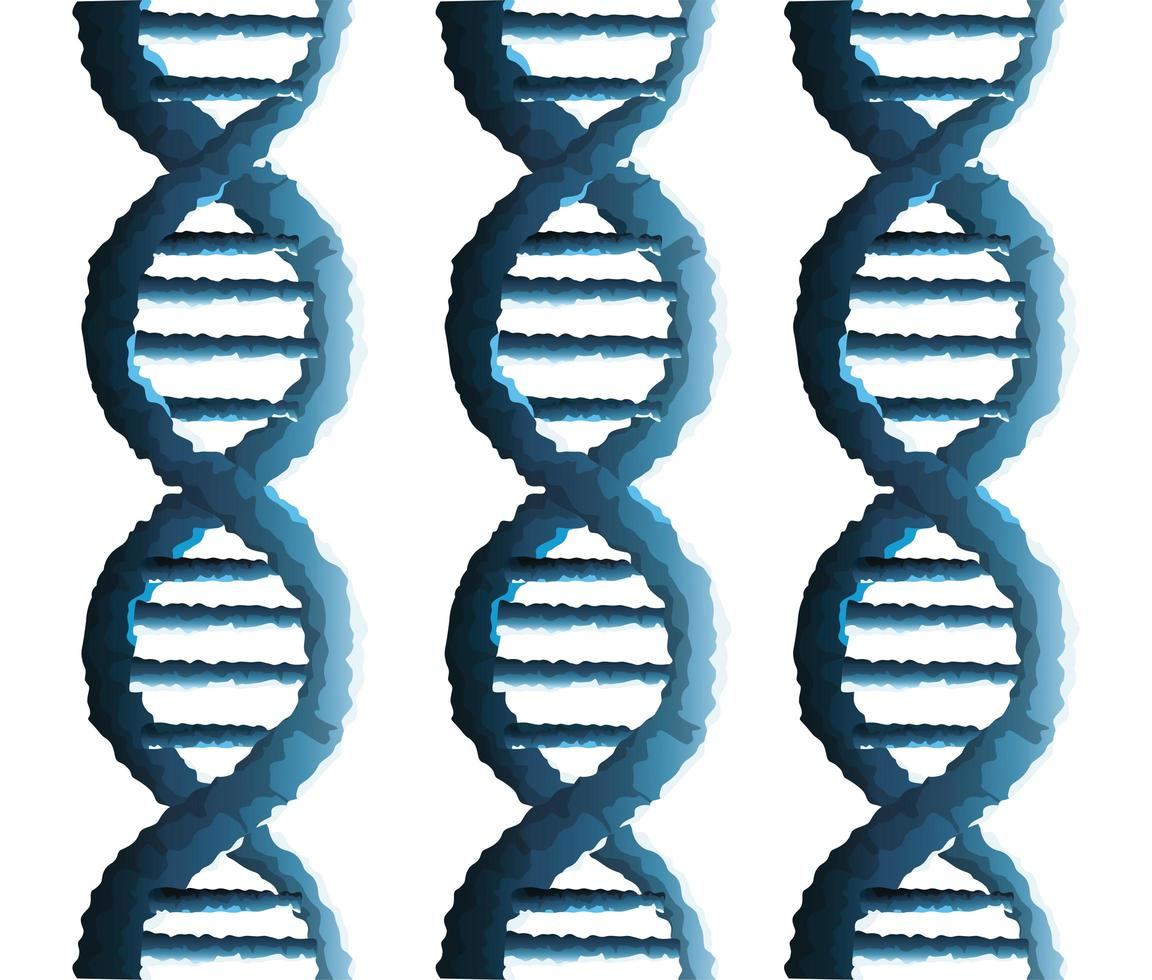 dna molecules genetic structure icon vector