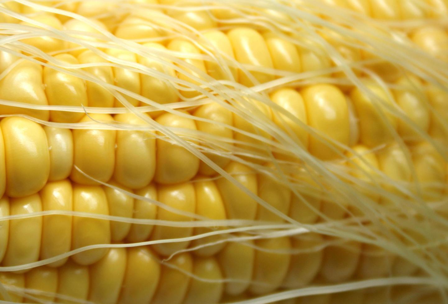 maíz y seda foto