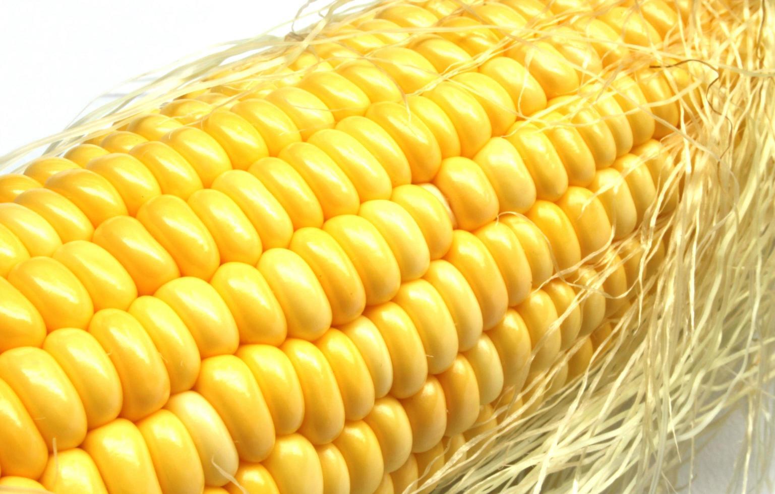 maíz en la mazorca foto