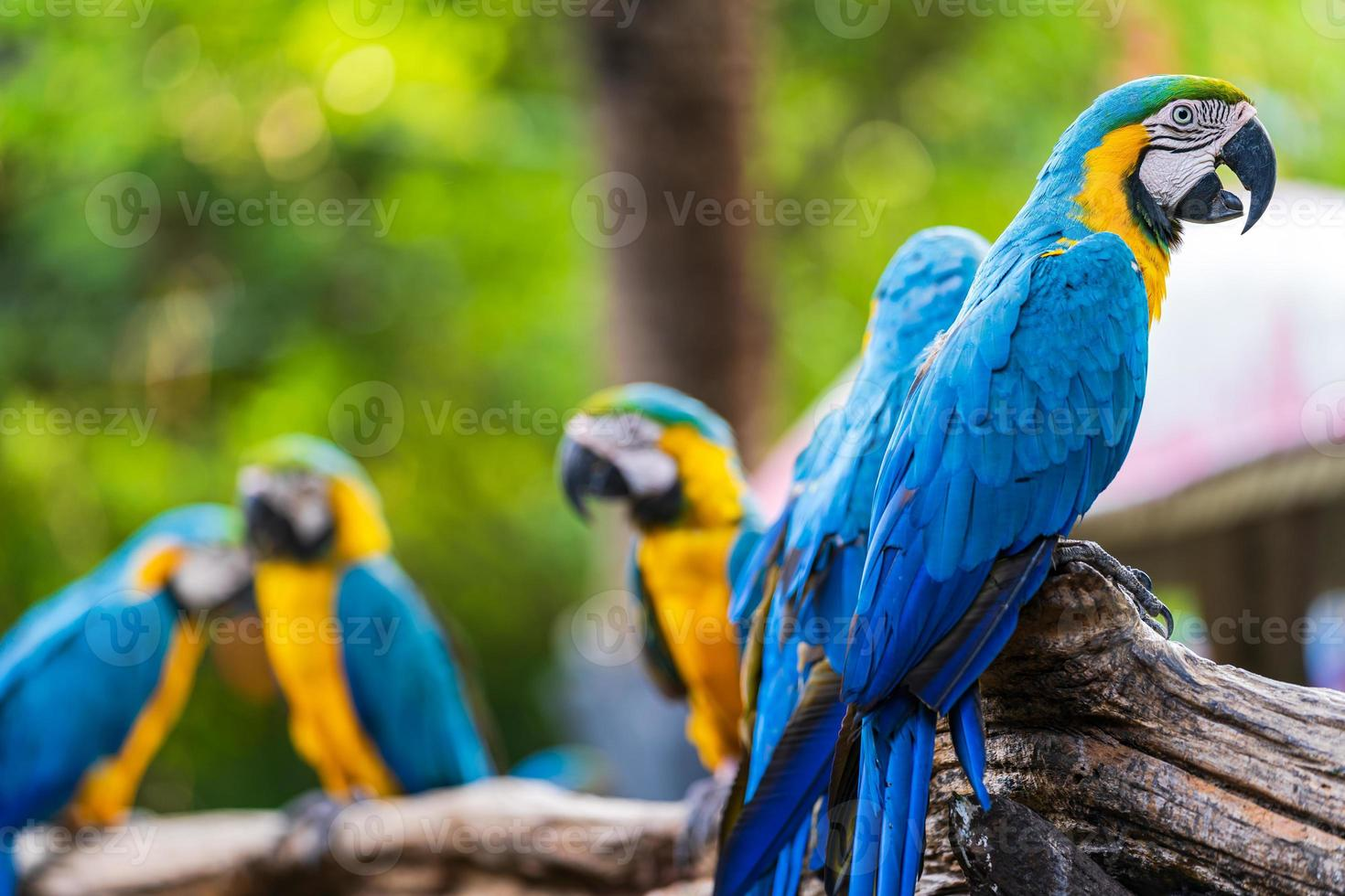 Group of macaws on branches photo