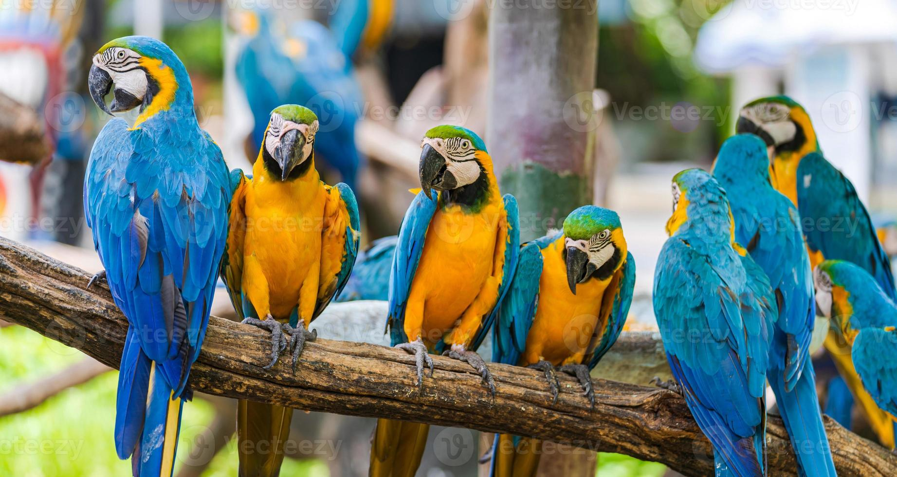 Macaw parrots on tree branches photo