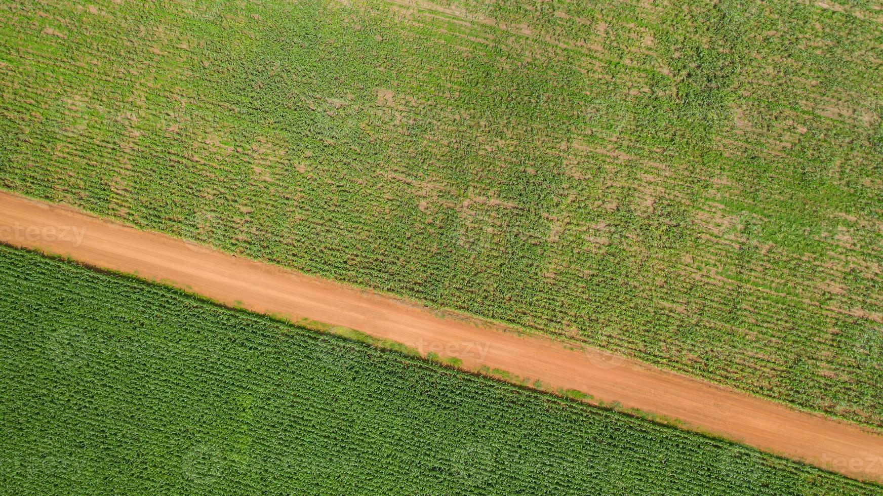 Aerial view of a corn field photo