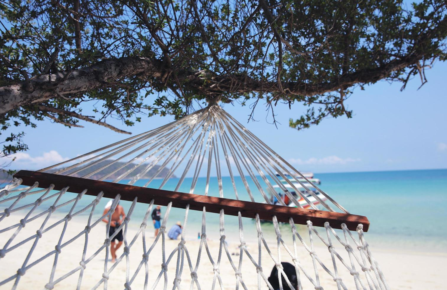Close up of a swing under a tree at the beach photo