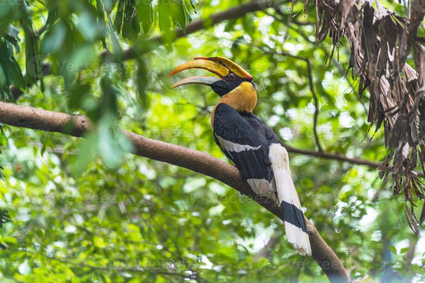 Hornbill bird perched in tree photo