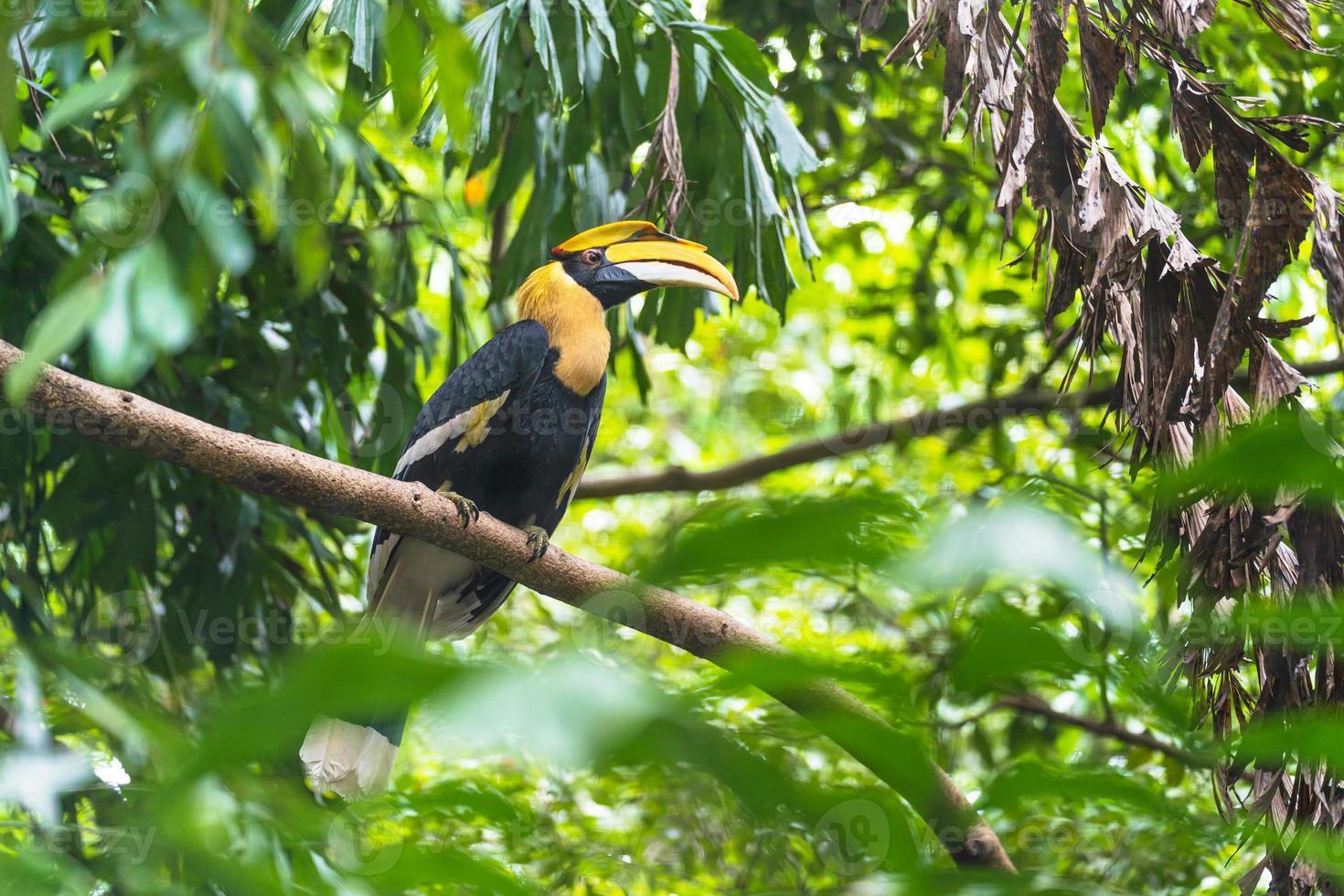 pájaro cálao en un árbol durante el día foto