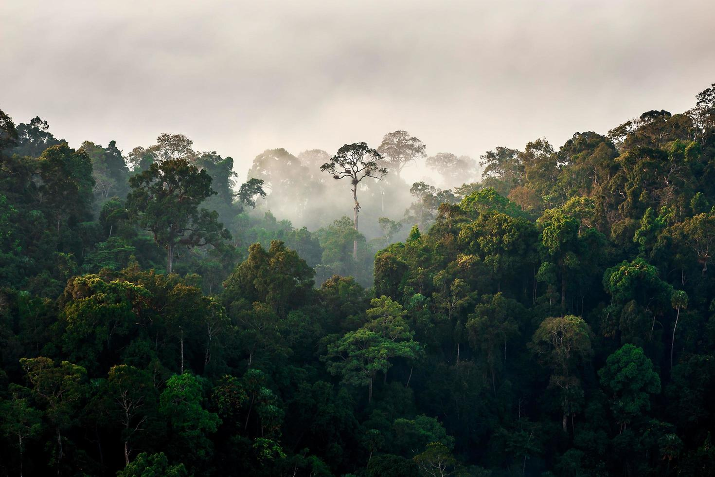 Morning fog in dense tropical rainforest, Kaeng Krachan, Thailand photo