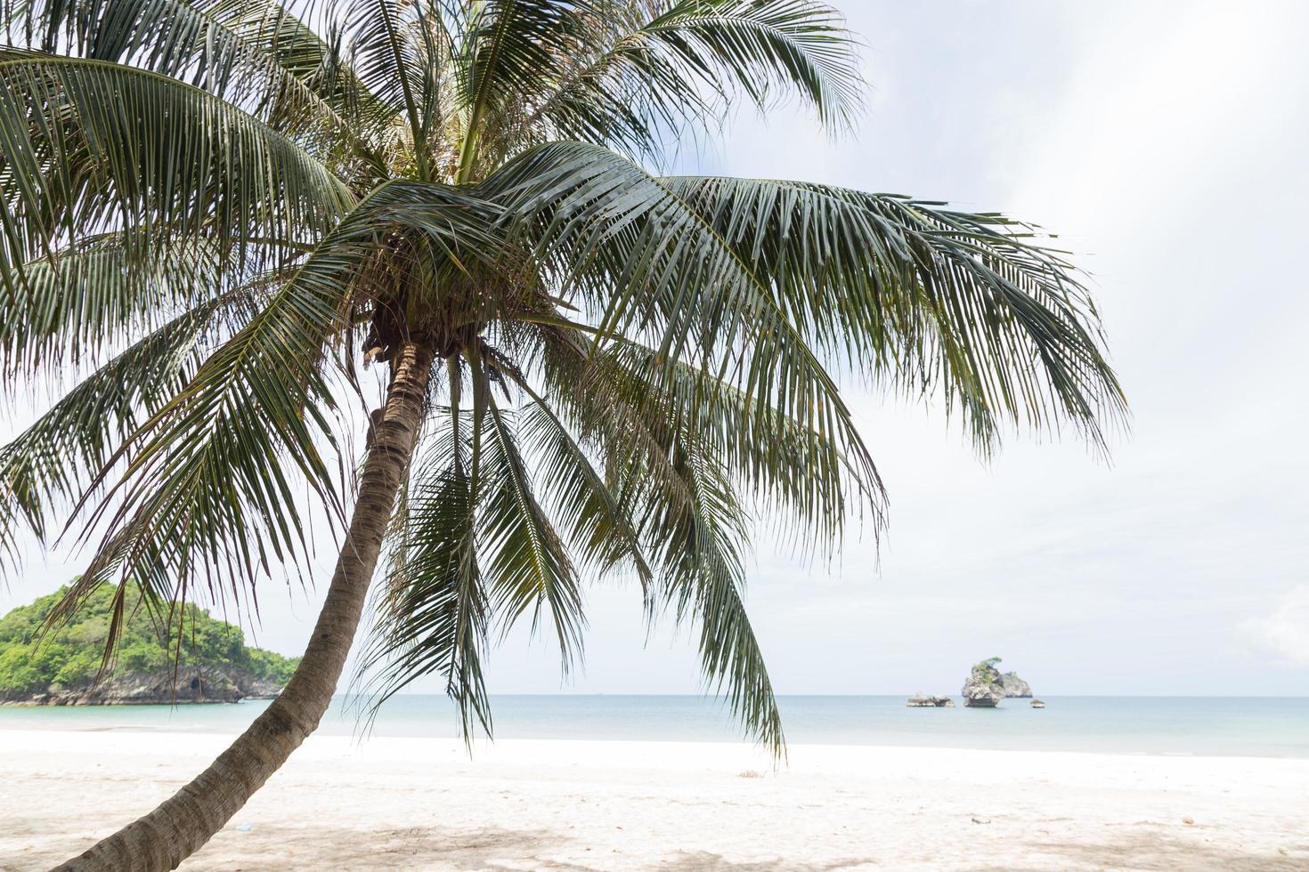 palma de coco en la playa foto