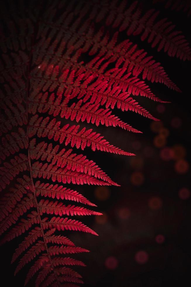hoja de helecho rojo en la naturaleza foto
