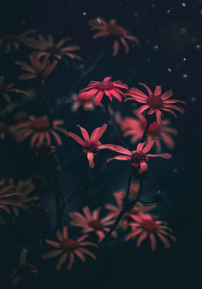 flores rojas en el jardín con edición cambiante foto