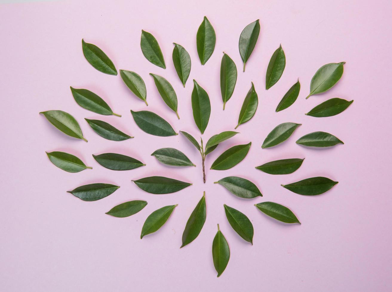 hojas sobre fondo rosa foto