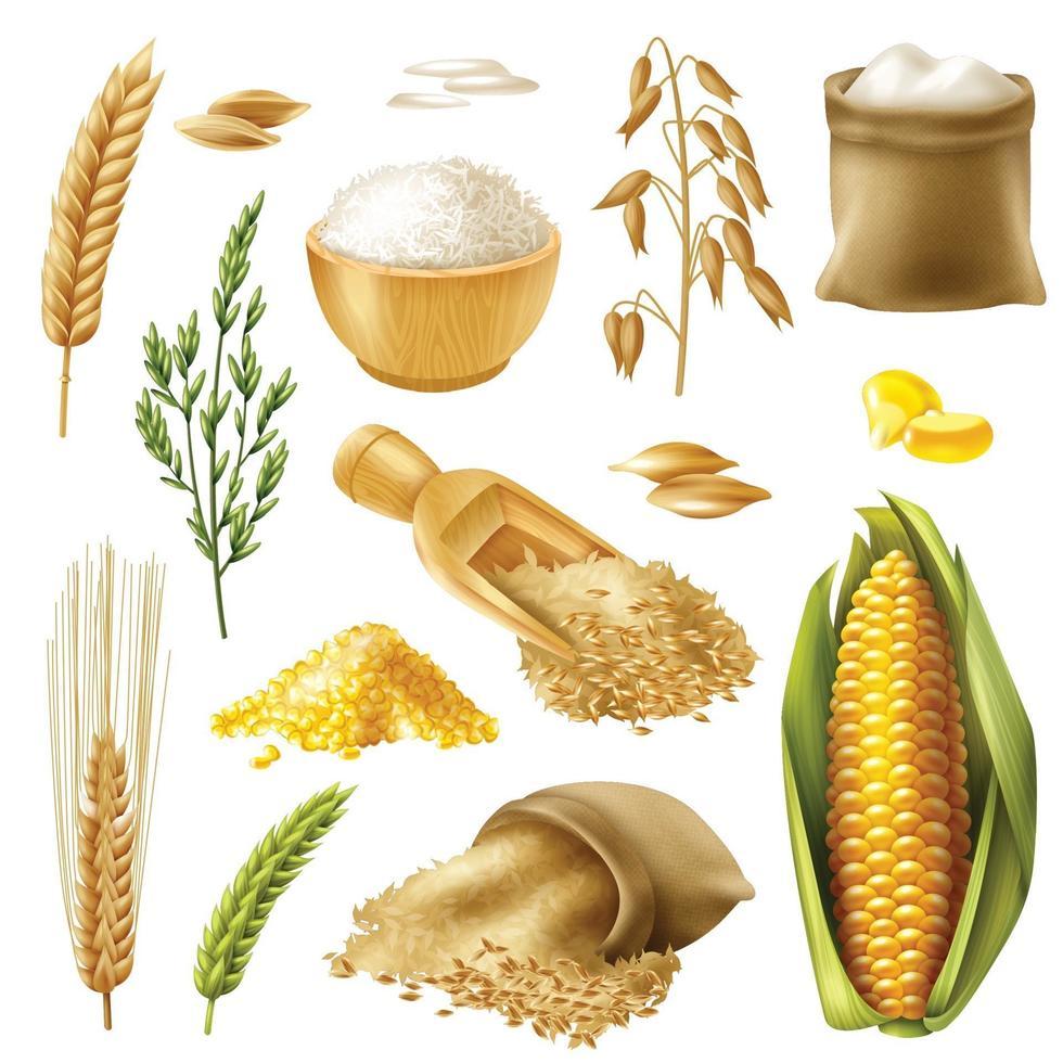 cereales, trigo, arroz, cebada, avena, maíz vector