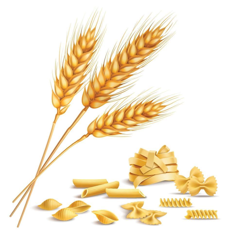 espiguillas de pasta y trigo realistas vector