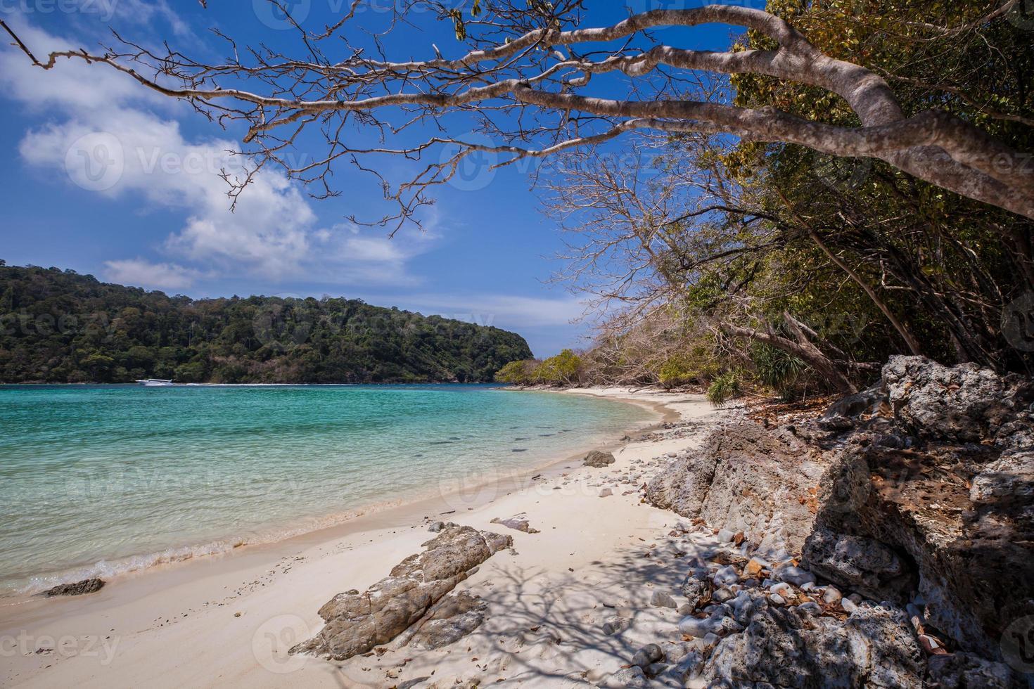 árboles en una playa tropical foto