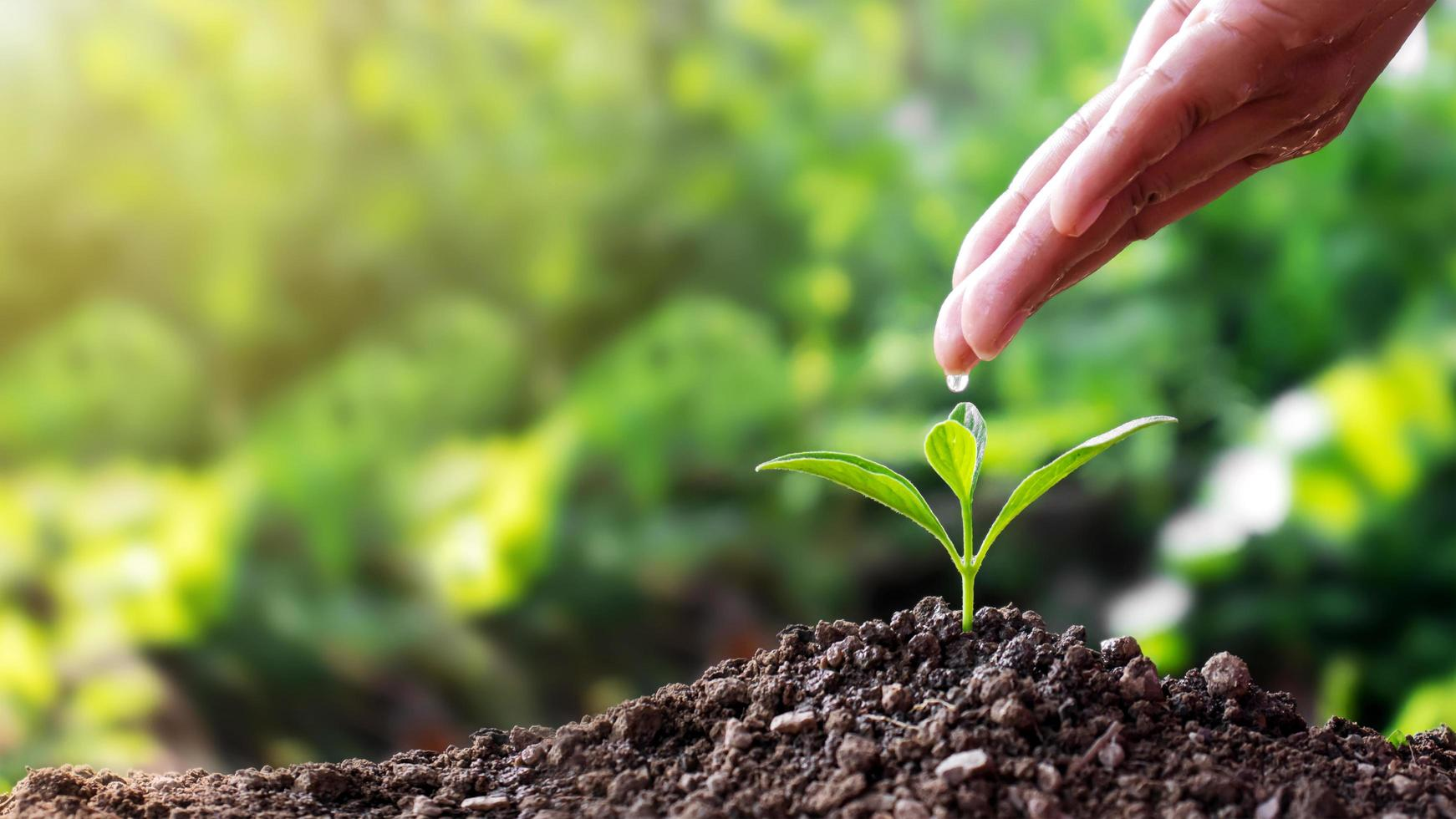 Seedlings on soil and hands, people pouring water, water cars, trees, plant growth ideas and text space photo