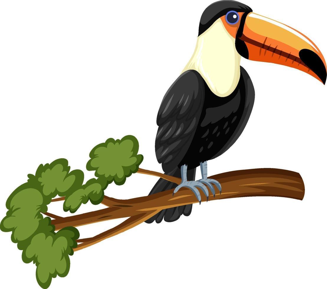 Tucán pájaro en una rama aislado sobre fondo blanco. vector