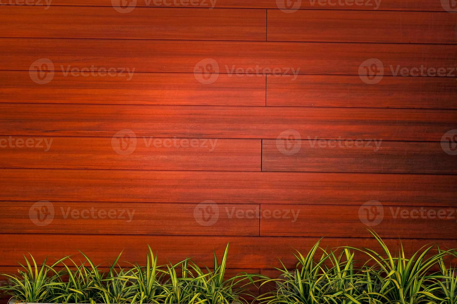 Wood texture backgrounds with plants photo