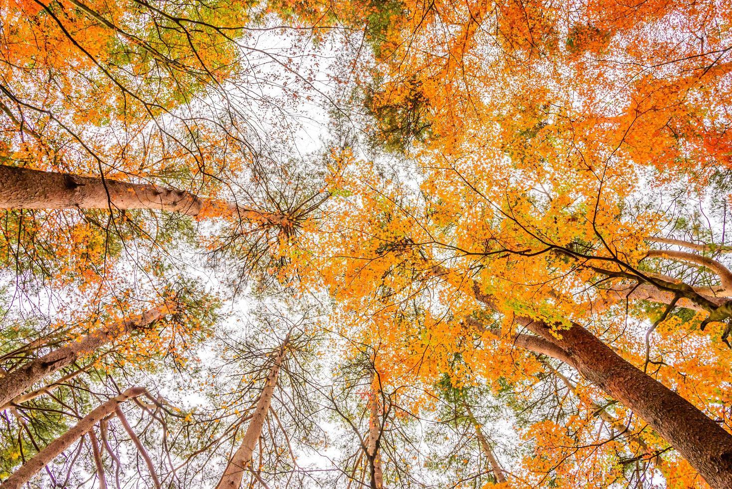 arces en otoño foto
