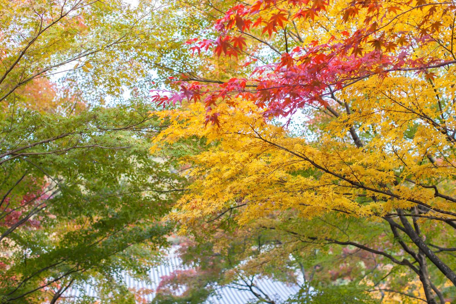Bright autumn leaves photo