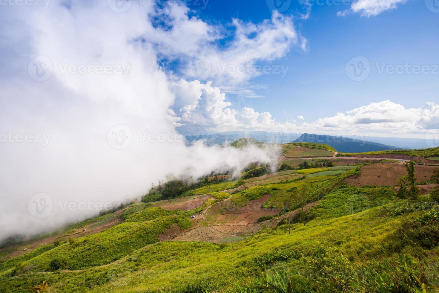 niebla cubriendo una colina foto