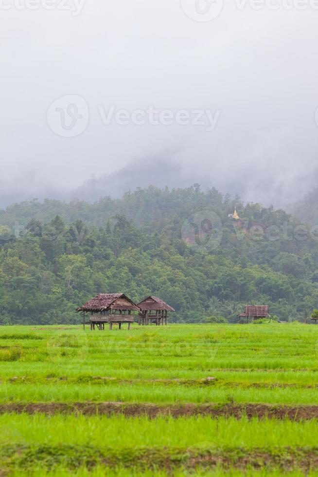 cabañas de madera en un campo verde foto