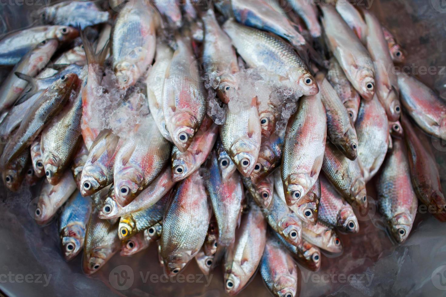 pila de pescado foto