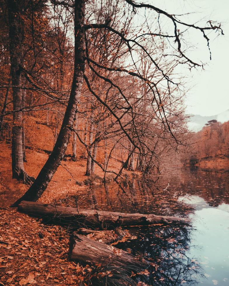 temporada de otoño con hojas marrones y naranjas foto