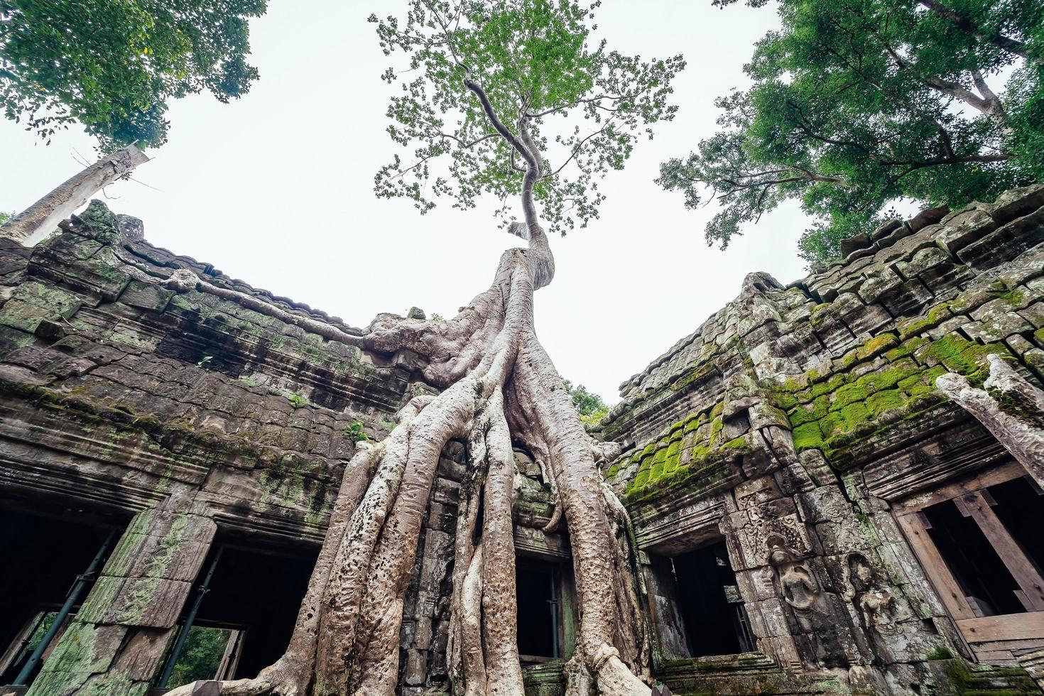 Templo de Ta Prohm cubierto de árboles en Angkor, Siem Reap, Camboya foto