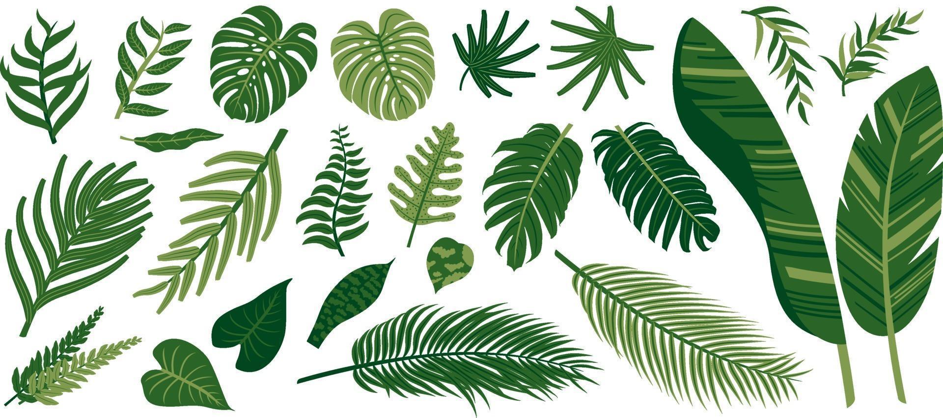 hojas tropicales sobre fondo blanco ilustración vectorial vector