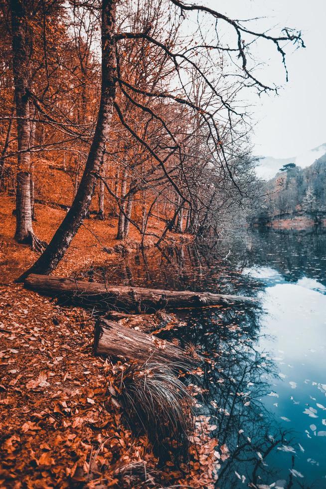 hermosas hojas de otoño en un río foto