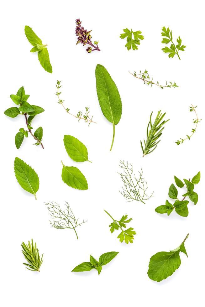 varias hierbas frescas foto