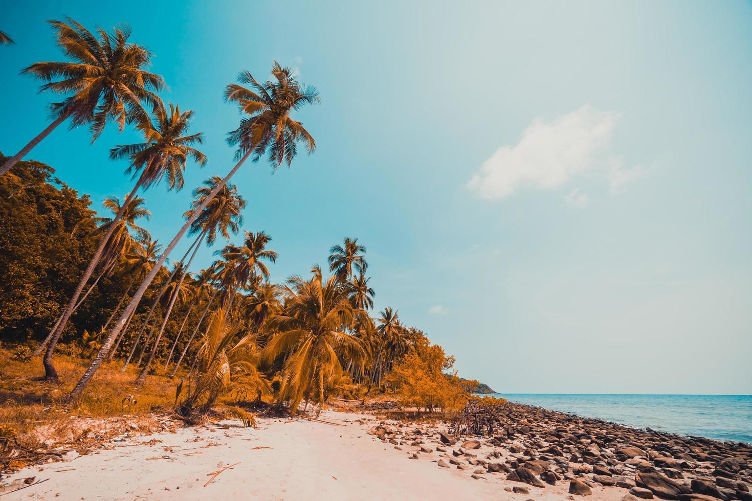 playa tropical y mar con cocoteros foto