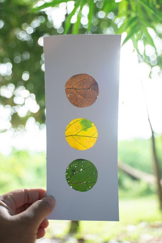 hojas naranjas, amarillas y verdes en papel, que recuerdan a un semáforo, retroiluminadas con fondo de bosque foto