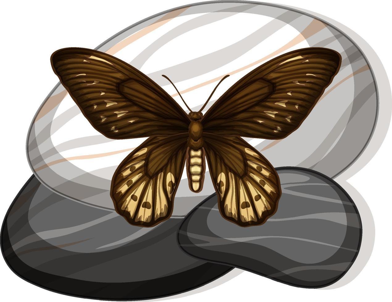 Vista superior de la mariposa sobre una piedra sobre fondo blanco. vector