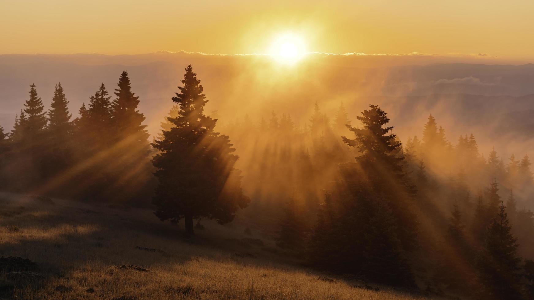 Green trees on colorful sunrise light photo