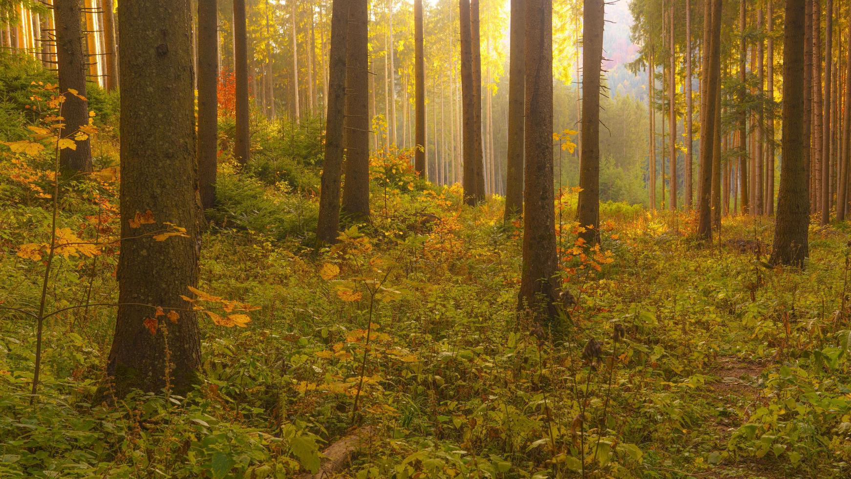 Autumnal scene in the forest photo