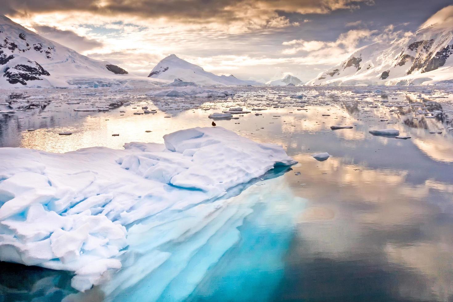 Paradise Bay in Antarctica photo