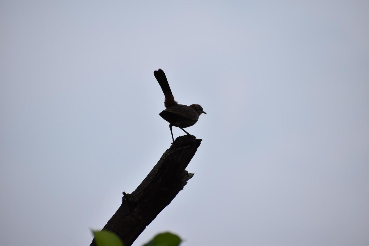 Silhouette of a bird perched on a tree branch photo
