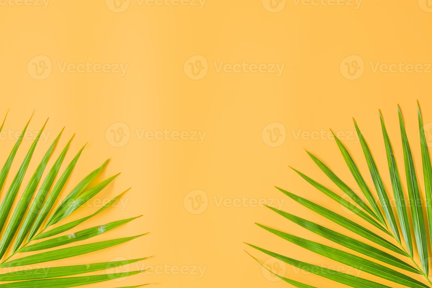 Palm leaves isolated on orange background photo