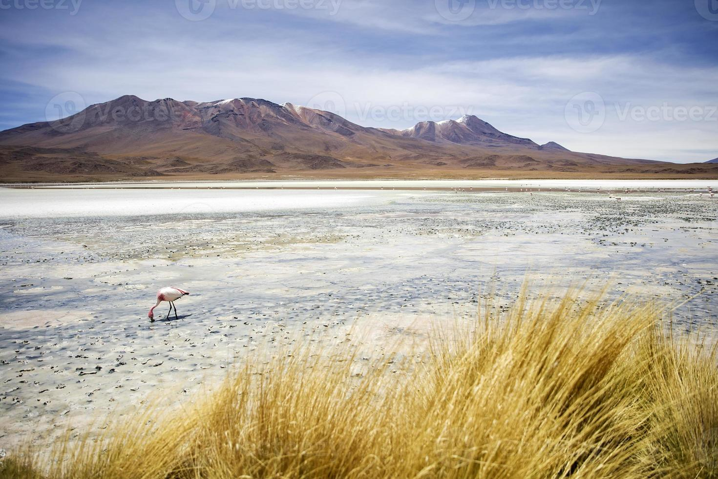 Laguna Hedionda en Bolivia foto