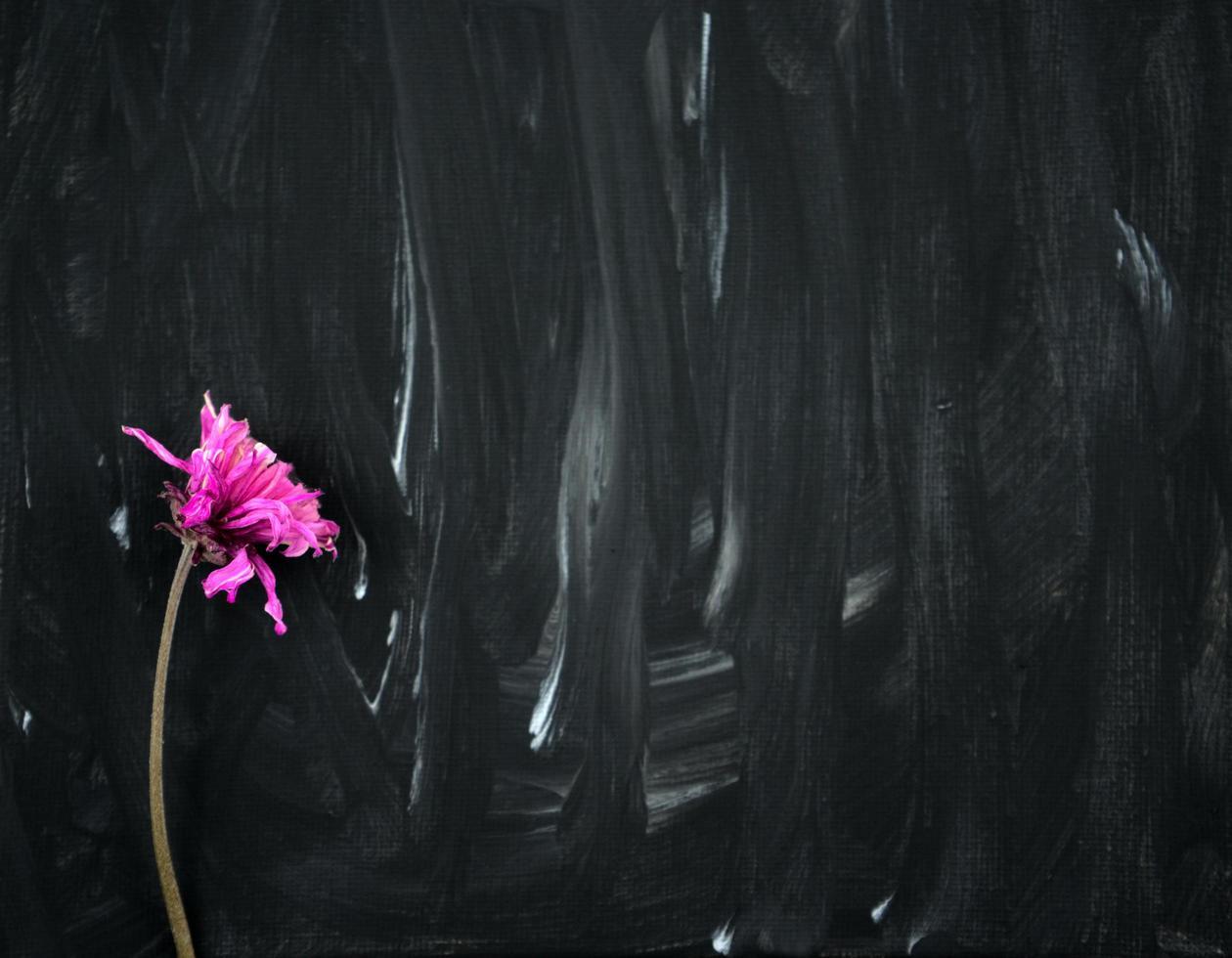 Flor rosa púrpura seca sobre fondo de pintura abstracta en blanco y negro foto