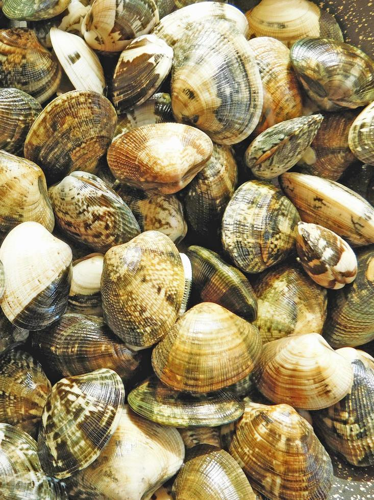 Close-up of pile of clams photo