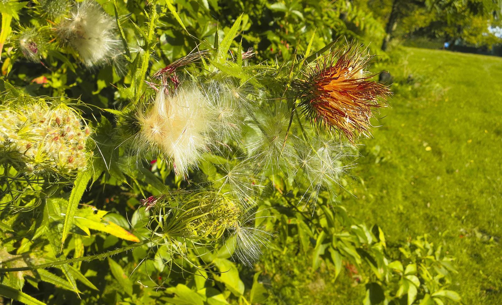 Flores hinchadas en un arbusto en un campo foto
