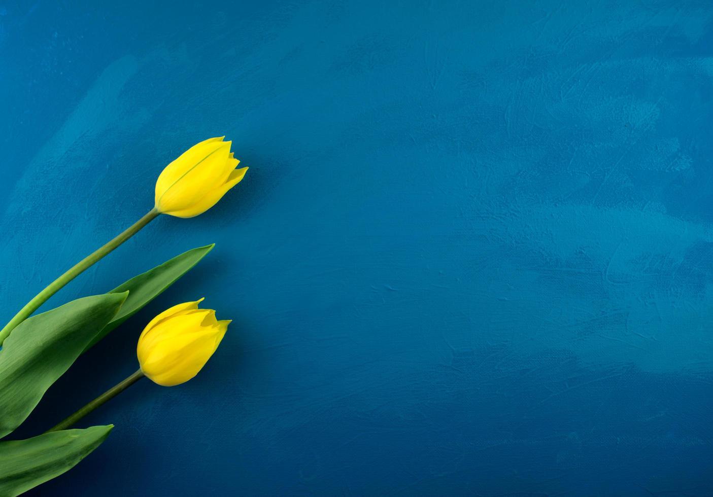 Bright yellow tulip flowers flat lay on handmade classic blue grunge abstract photo