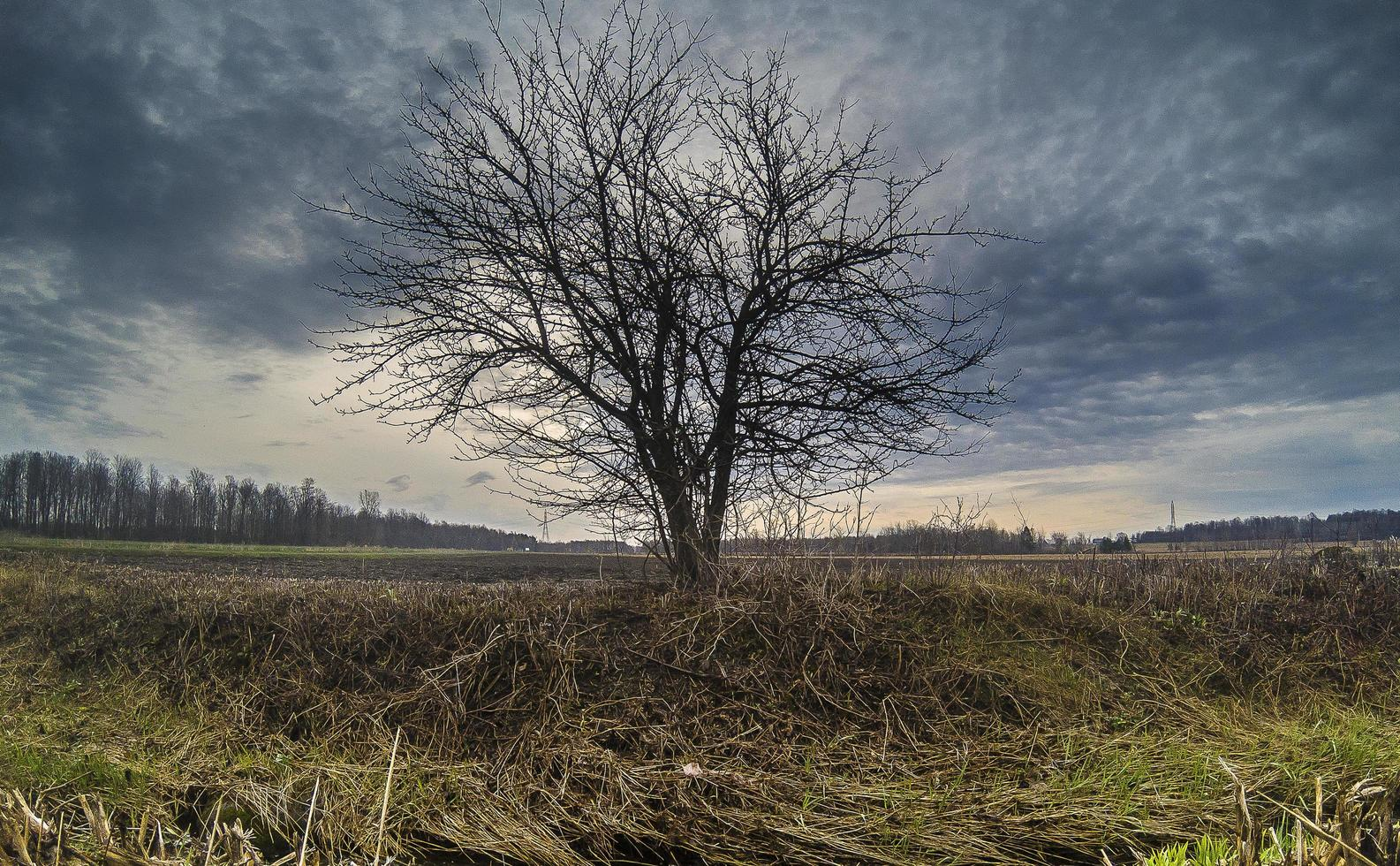 Single tree in a field against a cloudy blue sky photo