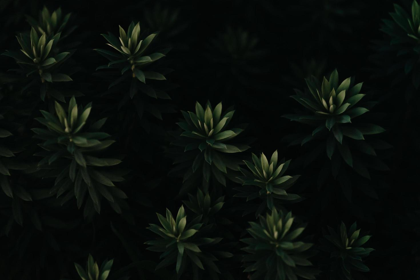 A close-up of a super textured repetitive dark green plant photo
