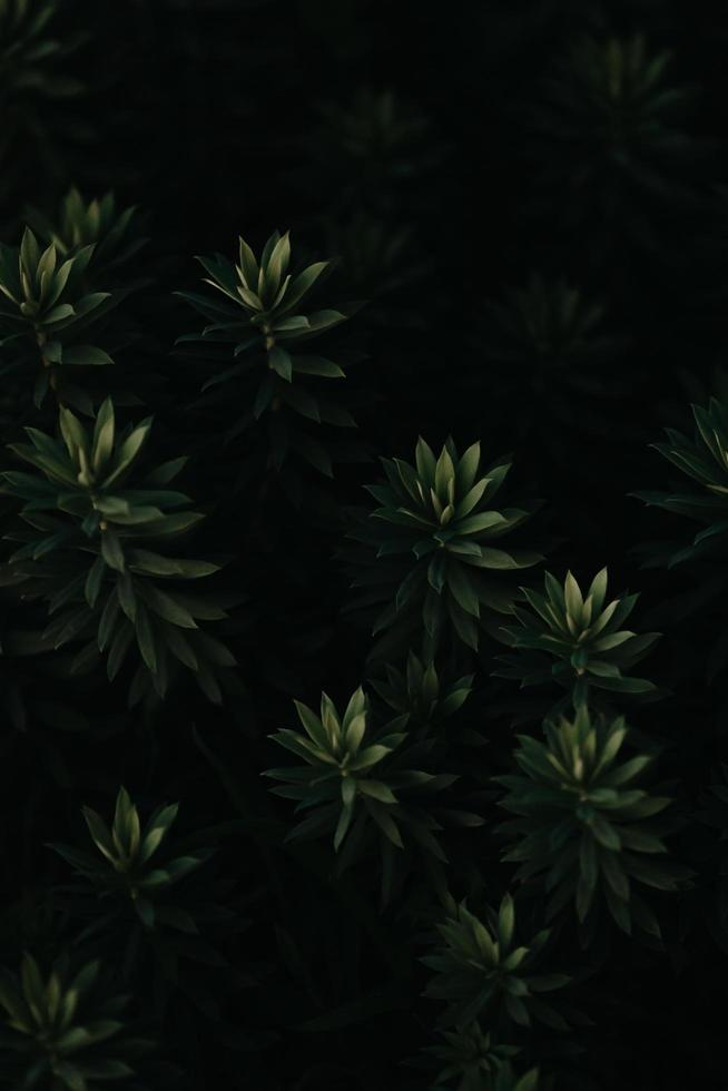 A background of dark green leaves with texture and copy space photo