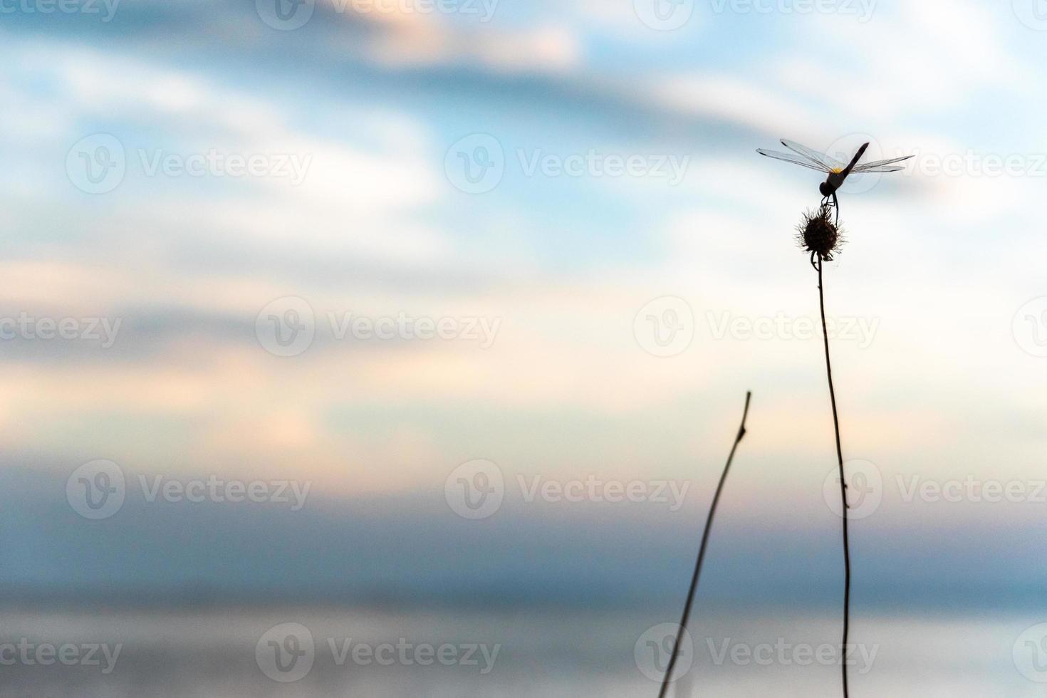 Dragonfly on a twig photo
