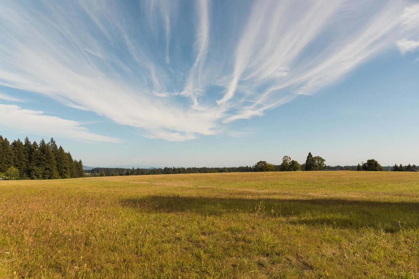 Large empty field under clouds photo